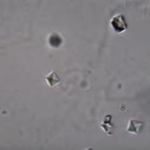 Crystals in Cat Urine